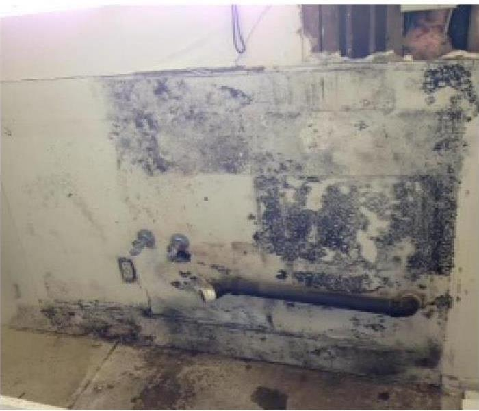 Mold Damage – Metairie Kitchen Before