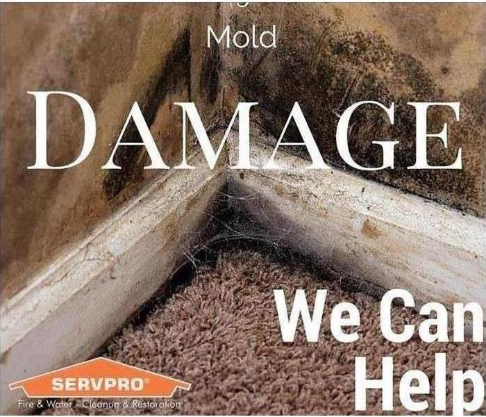 Mold on walls, baseboards, and carpet.