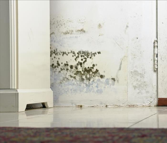 Mold Remediation Mold Damage Issues In Metairie